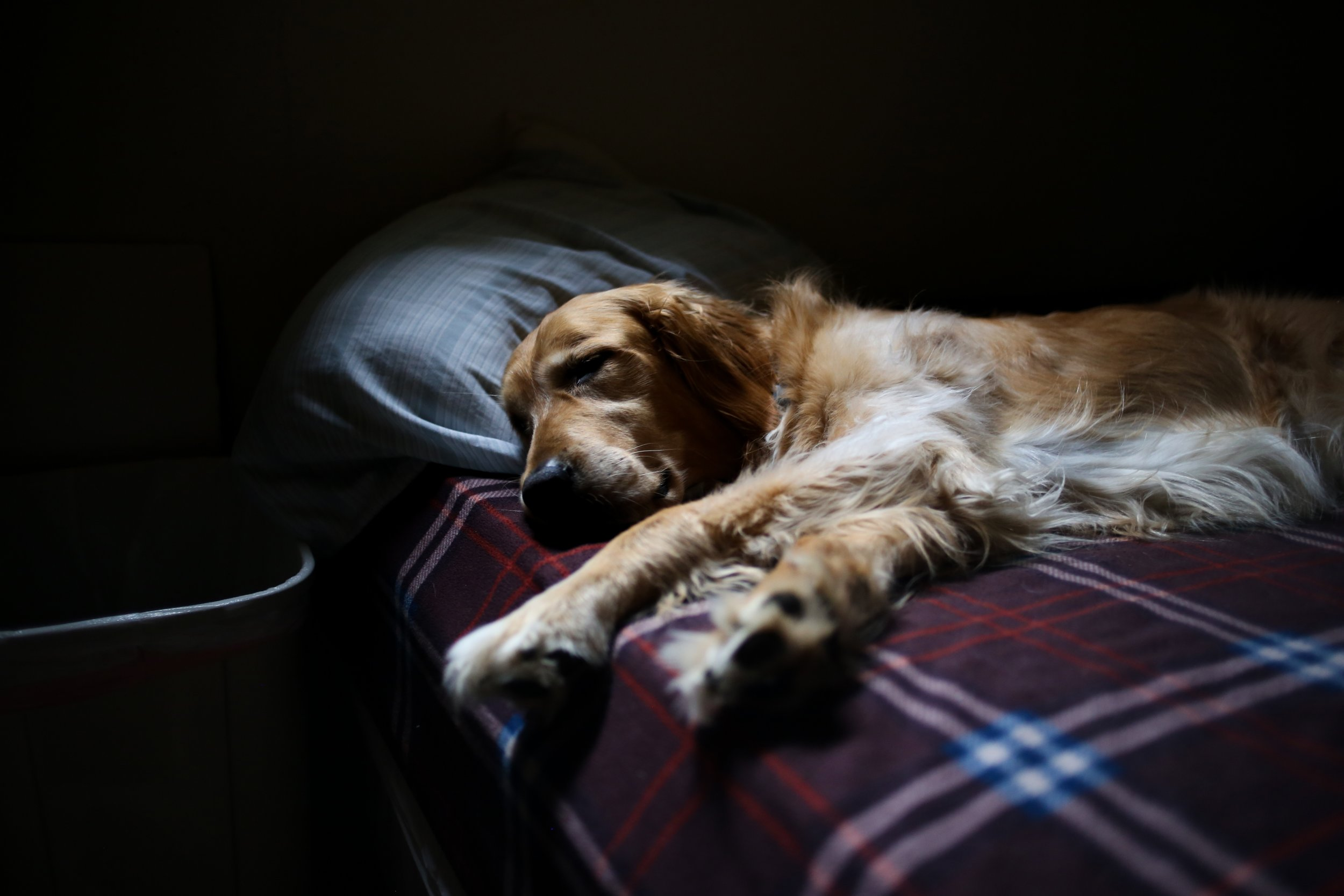 Seriously, your dog knows how important sleep is!- Image courtesy of  Jacob Ufkes