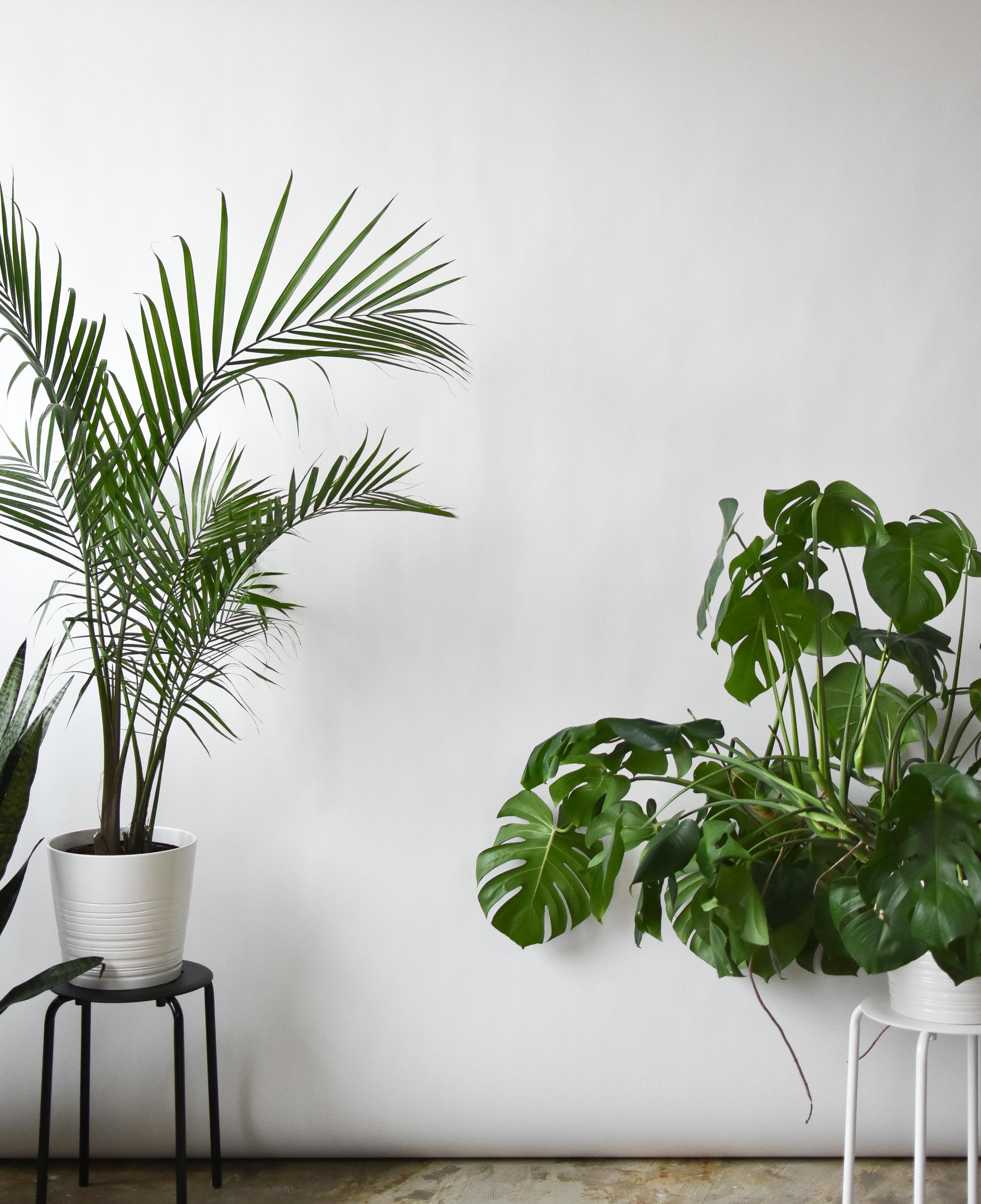 photography-studio-plants-dc