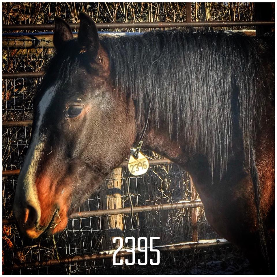 Mustang 2395.jpg