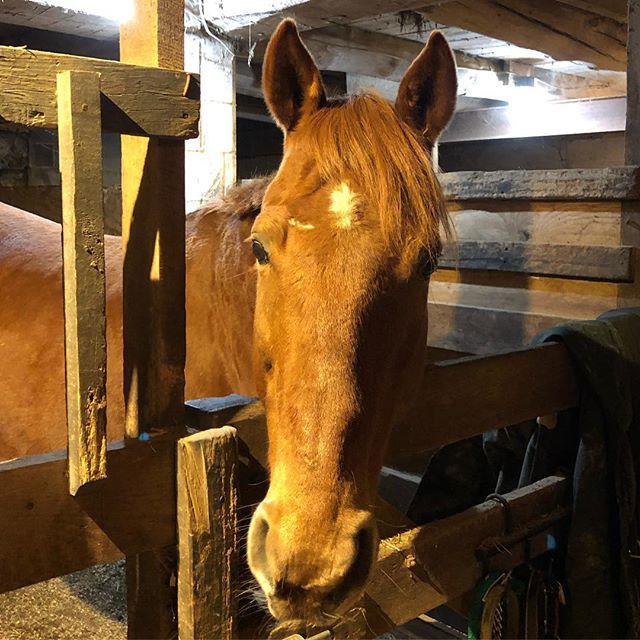 Hi Grady. 👋🏼 What did you do to your face? . . . #equestrian #equestrianlife #equine #equestrianblogger #barnlife #horsesofinstagram #hunterjumper #ottbofinstagram #ottb