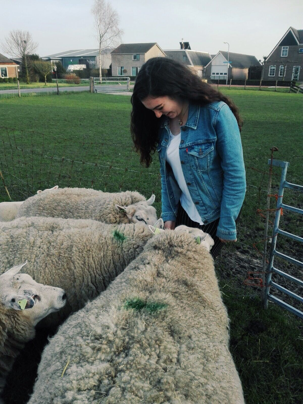 me and some wooly friends!