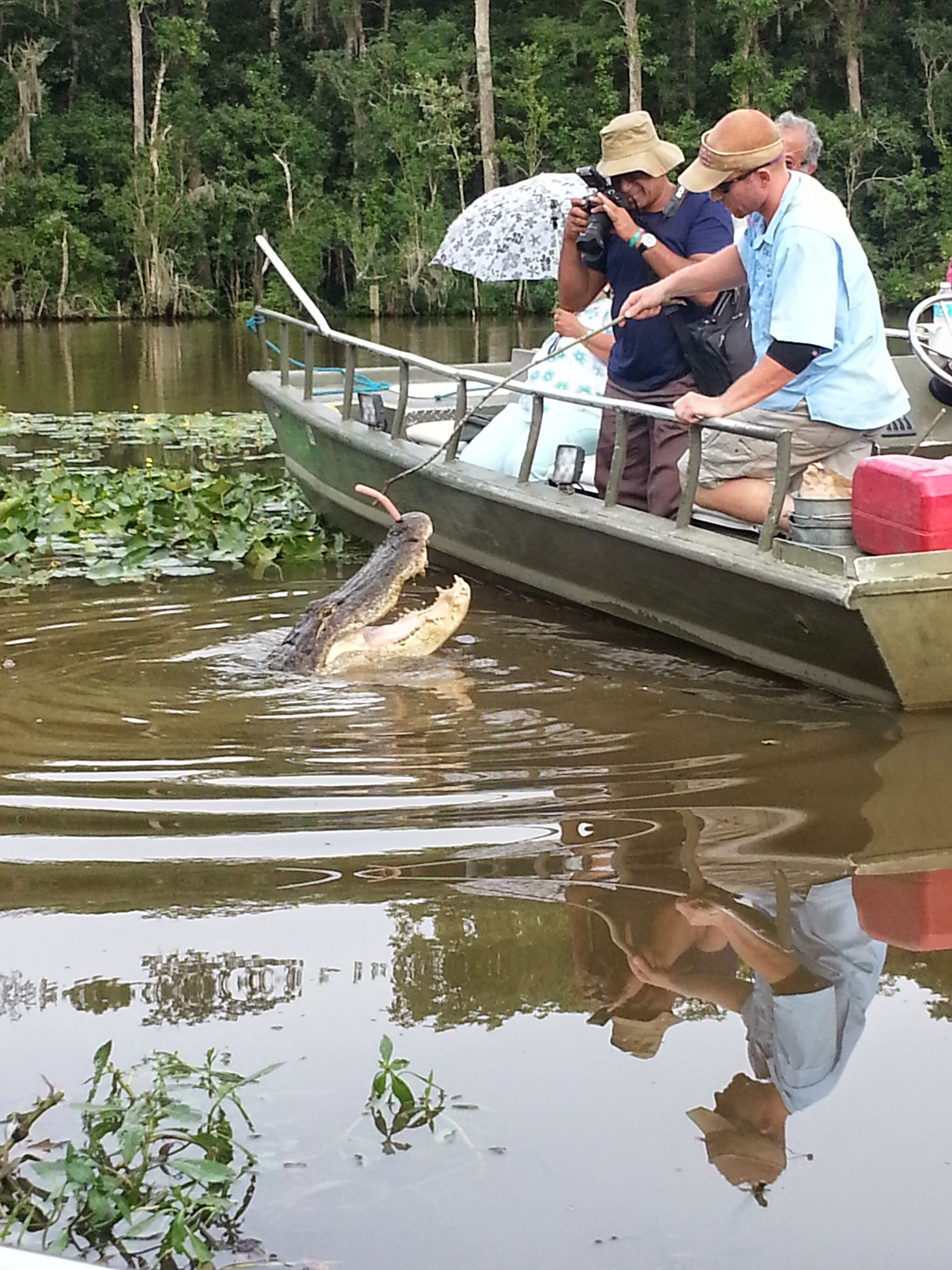 See! Like i'm sayin.... These gators in New Orleans put on a show! I got my monies worth!