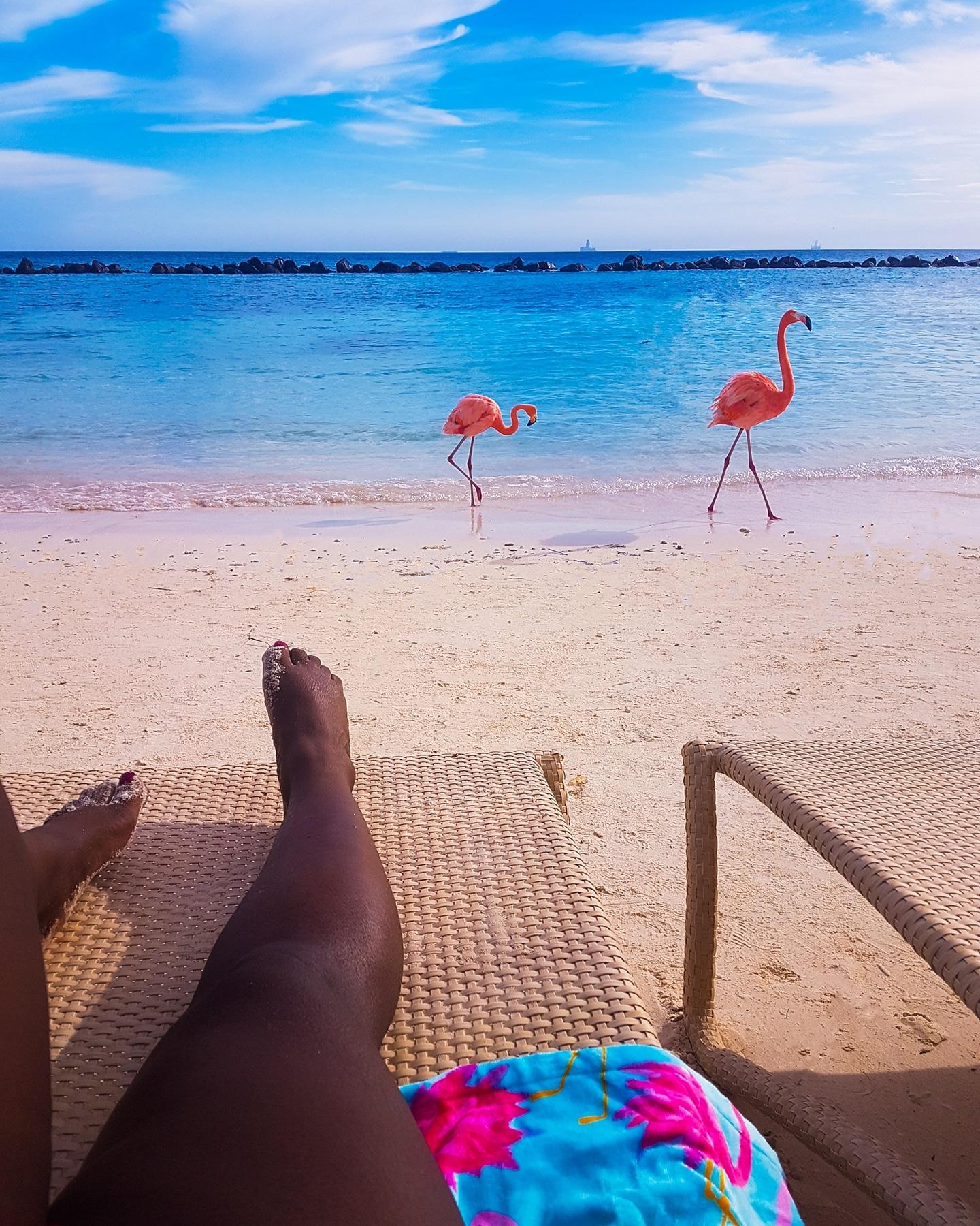 pink flamingos.jpg