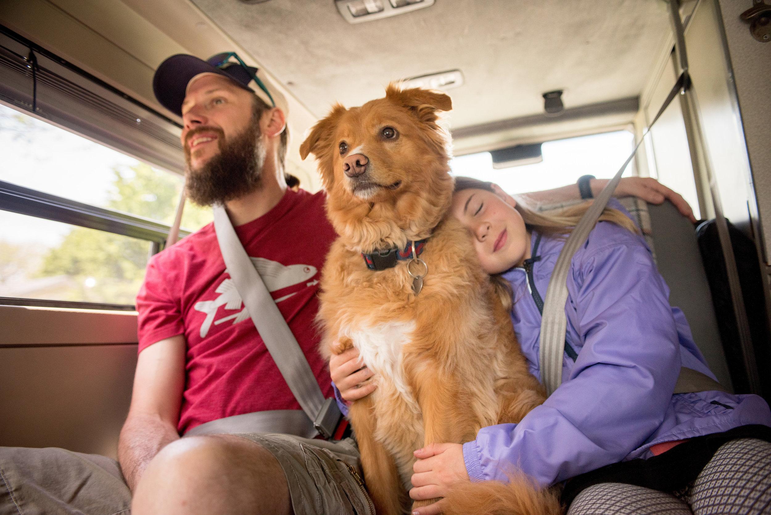 Many GoCamp camper vans are pet friendly.