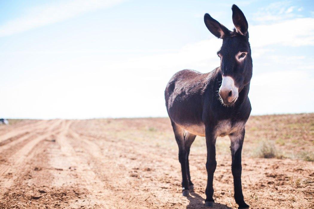 donkey-song.jpg