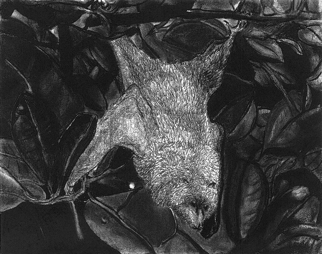 Fruit Bat w/ Charcoal