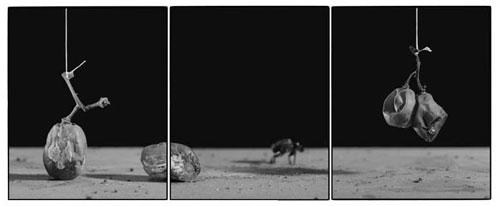 Joachim-Froese-Rhopography-36.jpg