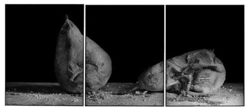 Joachim-Froese-Rhopography-28.jpg