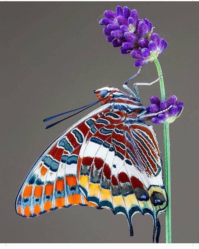 Natures pattern perfection #nature_perfection #pattern #art #creative #lovelife #amazing #boldemotionalcolorful