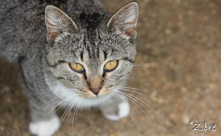 bama, the farm cat.