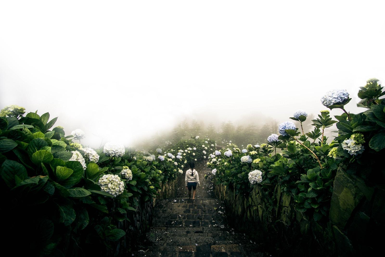 Melissa Ambrossini - Following Your Truth.jpg