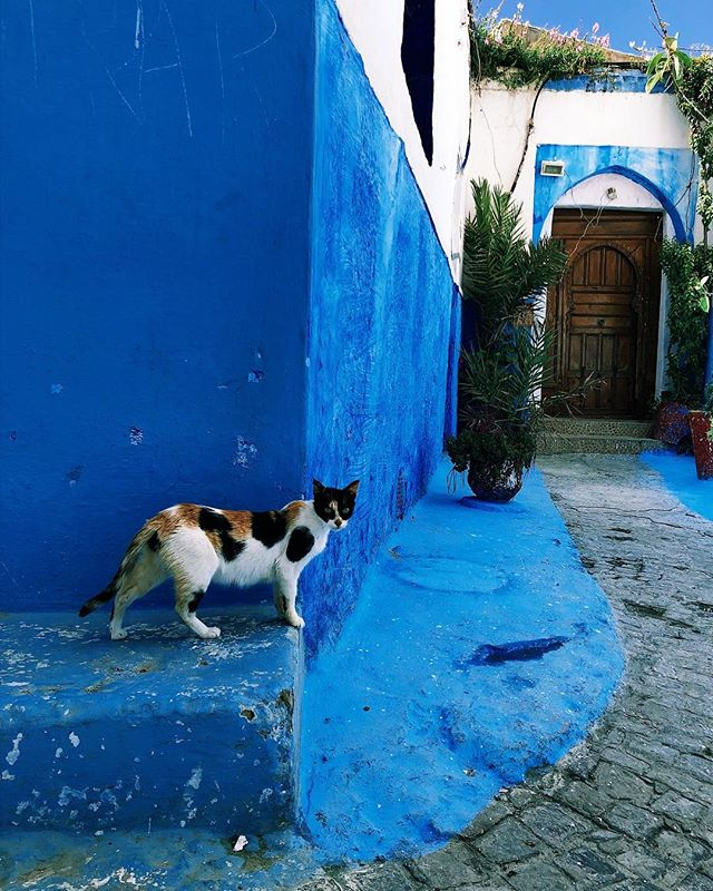 Shot of the trip so far in Rabat, Morocco's capital. #catsoftheworld #rabat #morocco #travelcat