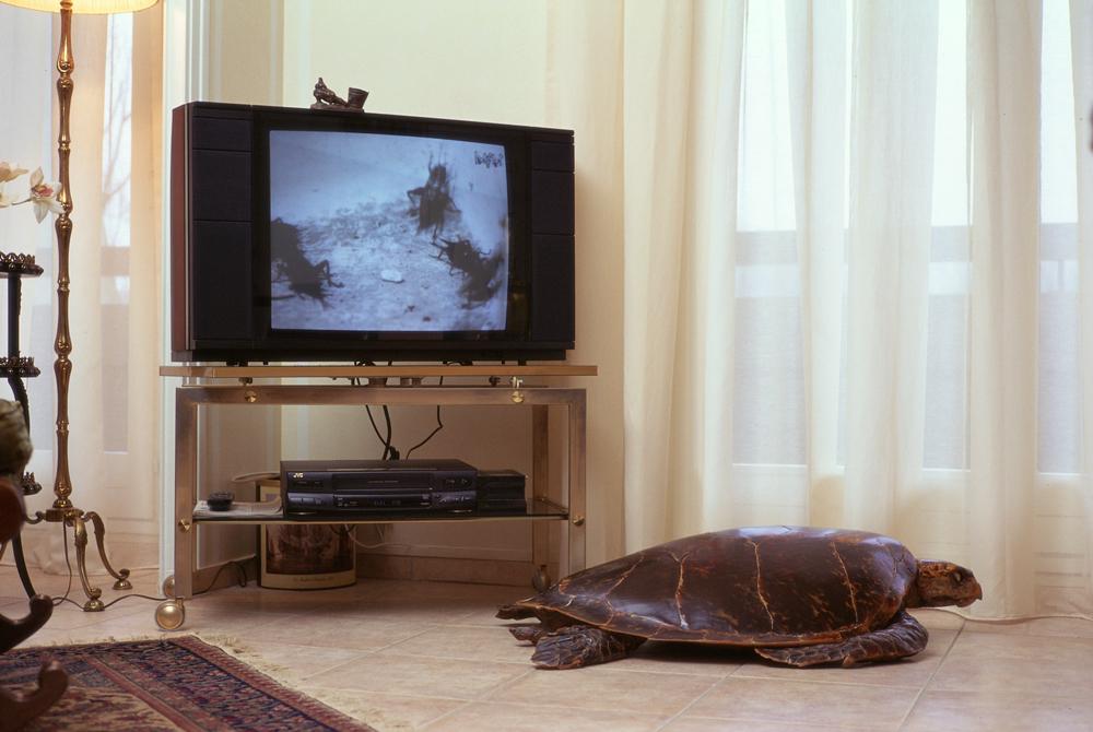 reggiardo-objet-television-27.jpg