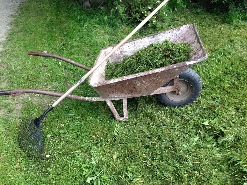 Manually collecting the chopped-off grass from the ground.