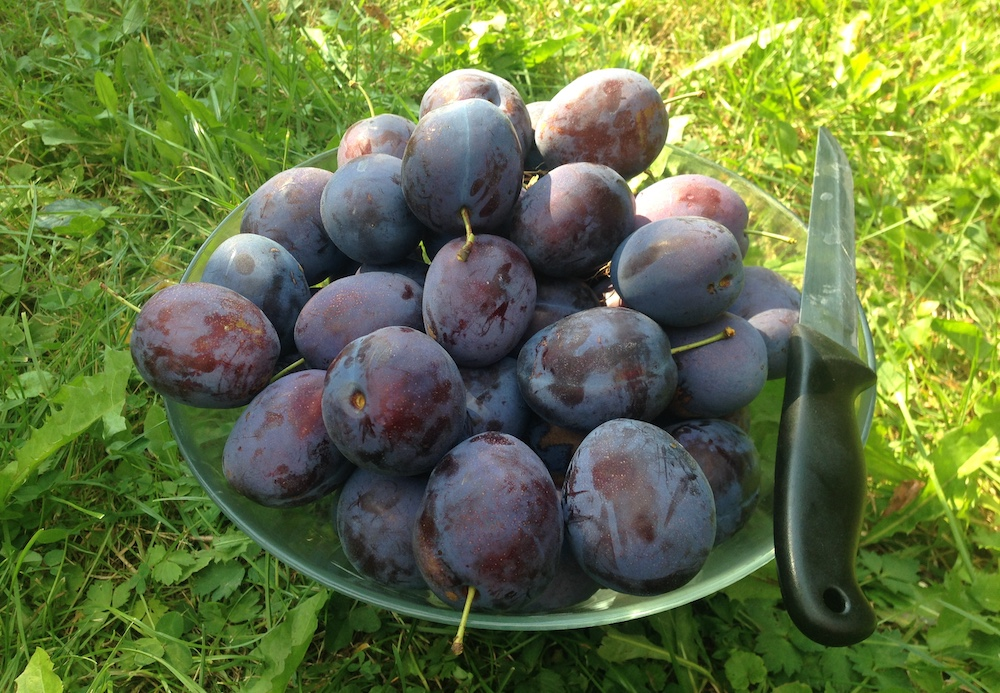 Plums: one of the system's profitable products.