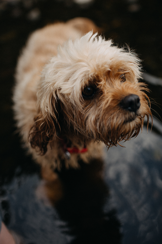 pet-photographer-yorkshire.jpg