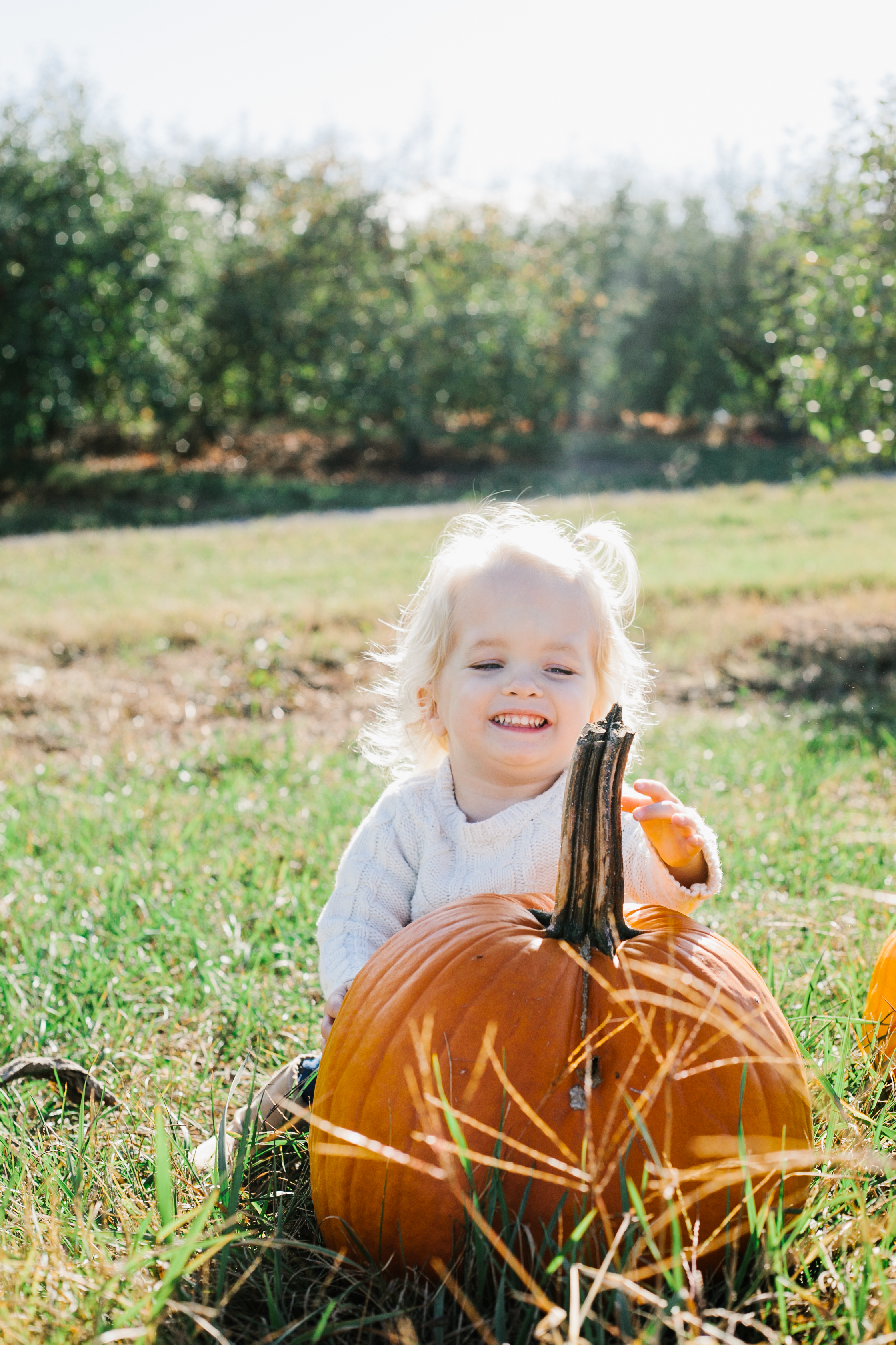 Toddler Girl and Pumpkin Patch