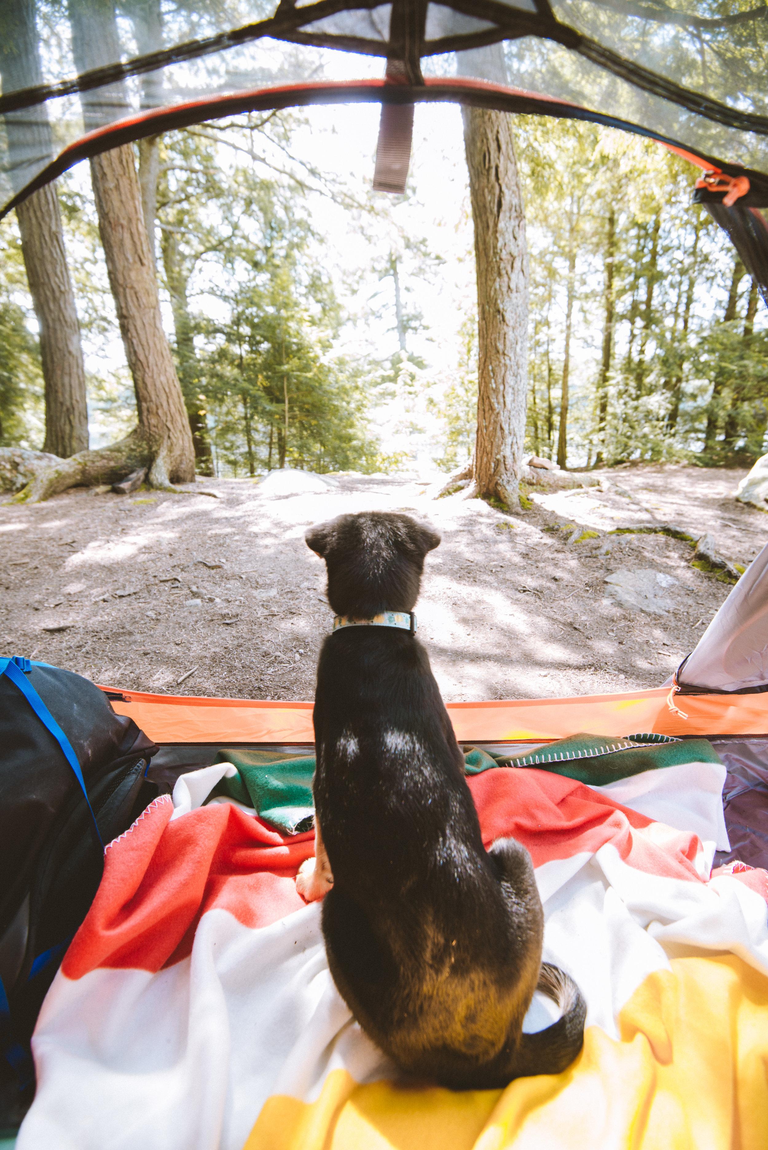 First camp trip