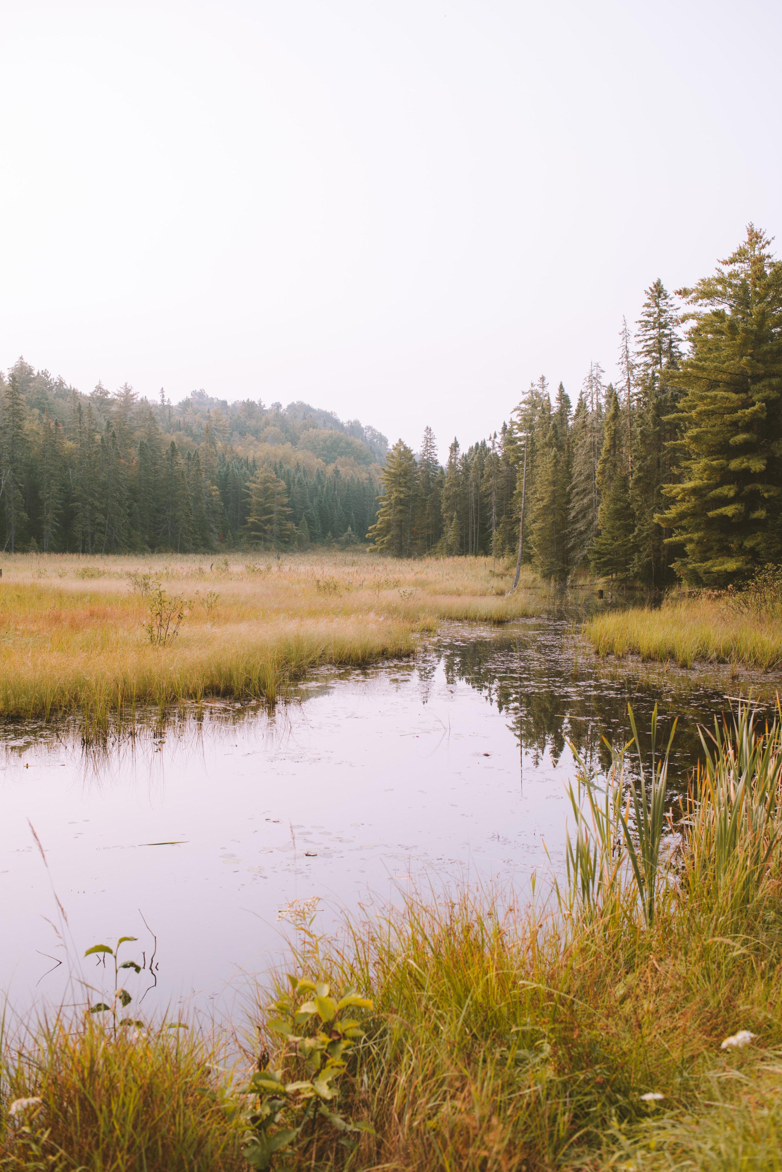 Rock Lake -Algonquin Provincial Park