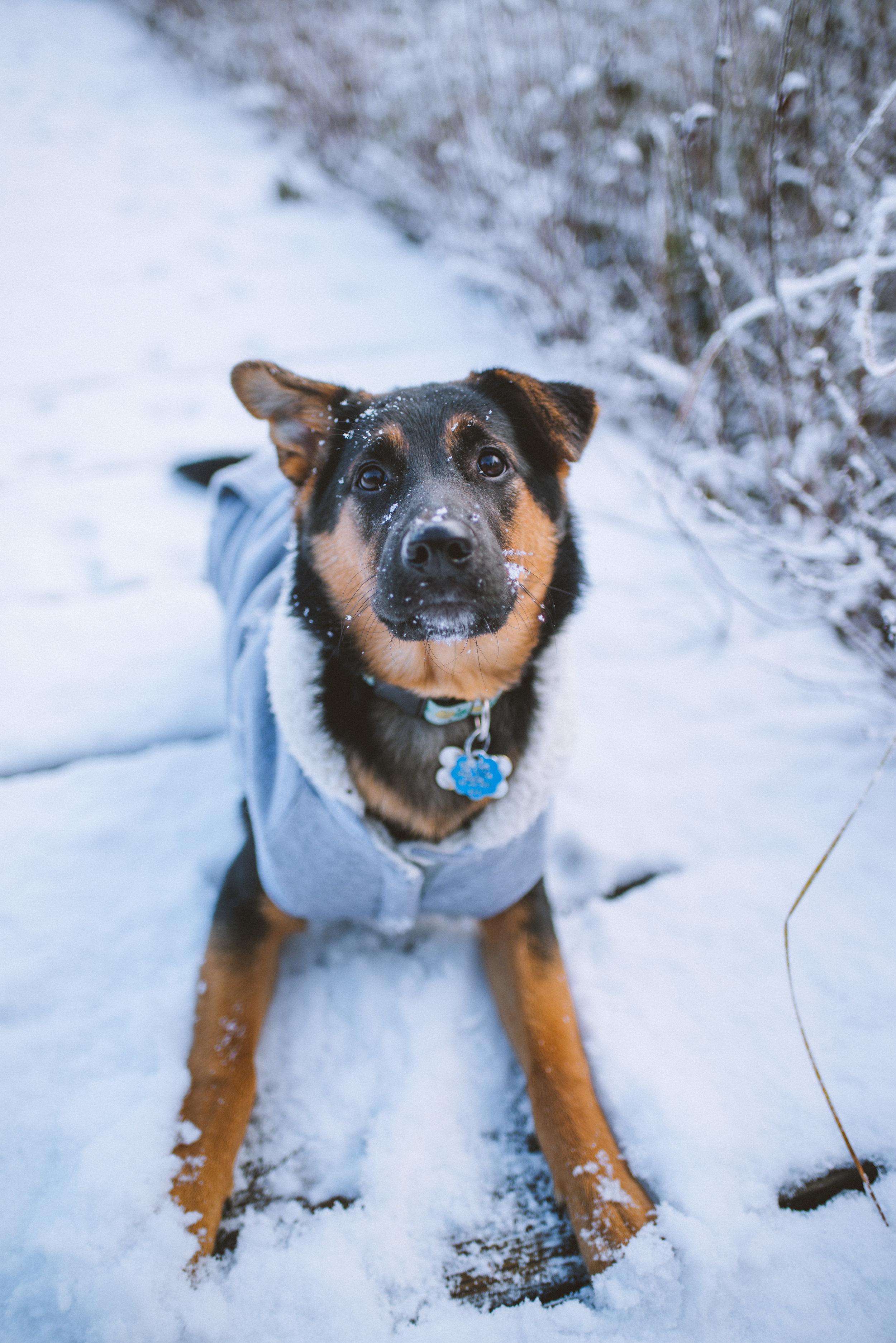 Luna's first sight of snow -Algonquin Provincial Park