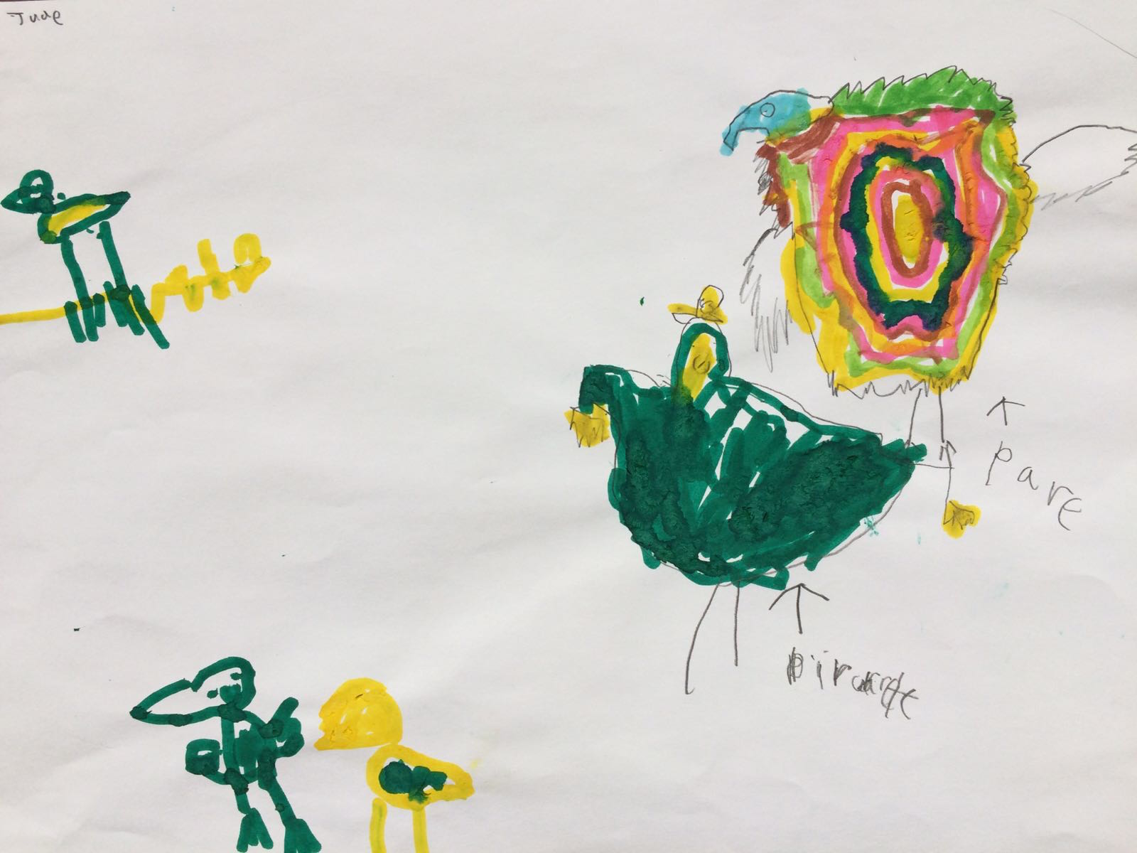 Different parrots, by Jude
