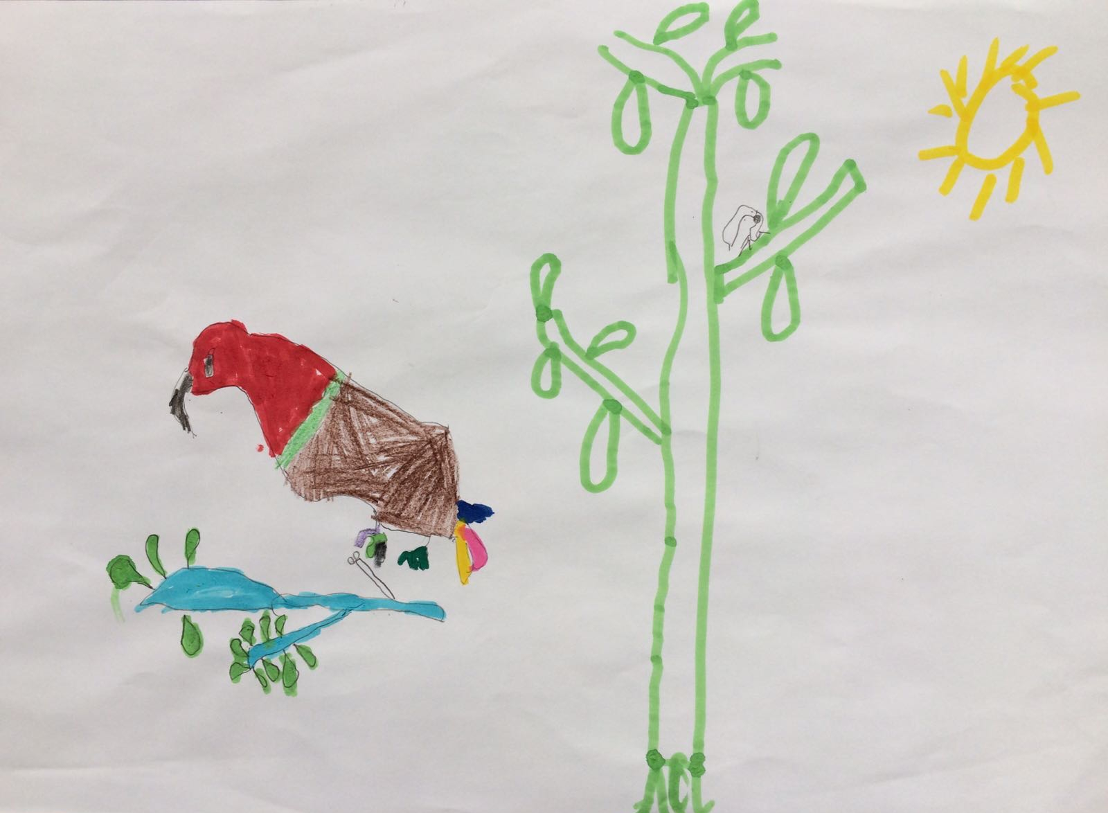 A red parrot, by Kaiden