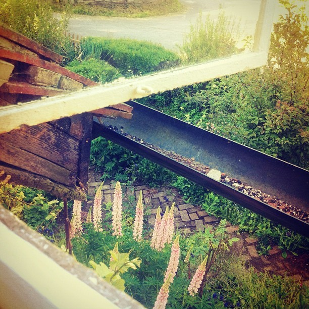 Beautiful old windows out onto the garden. (Taken with  instagram )
