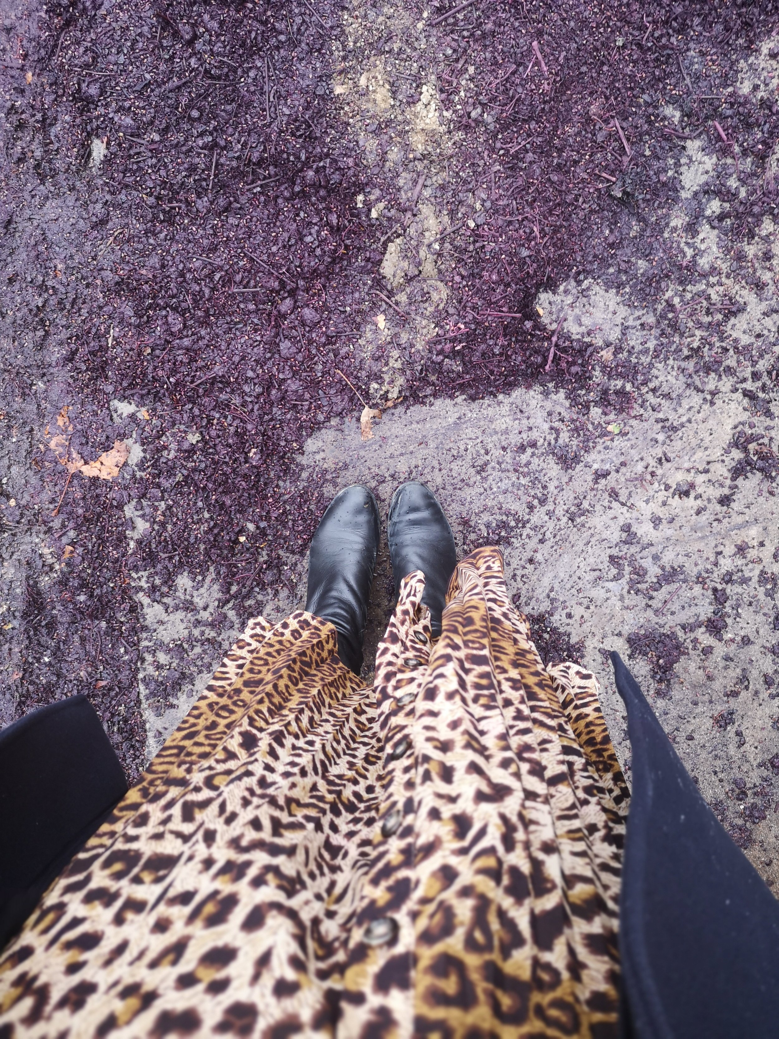FWIS outfit shot leopard print skirt wine