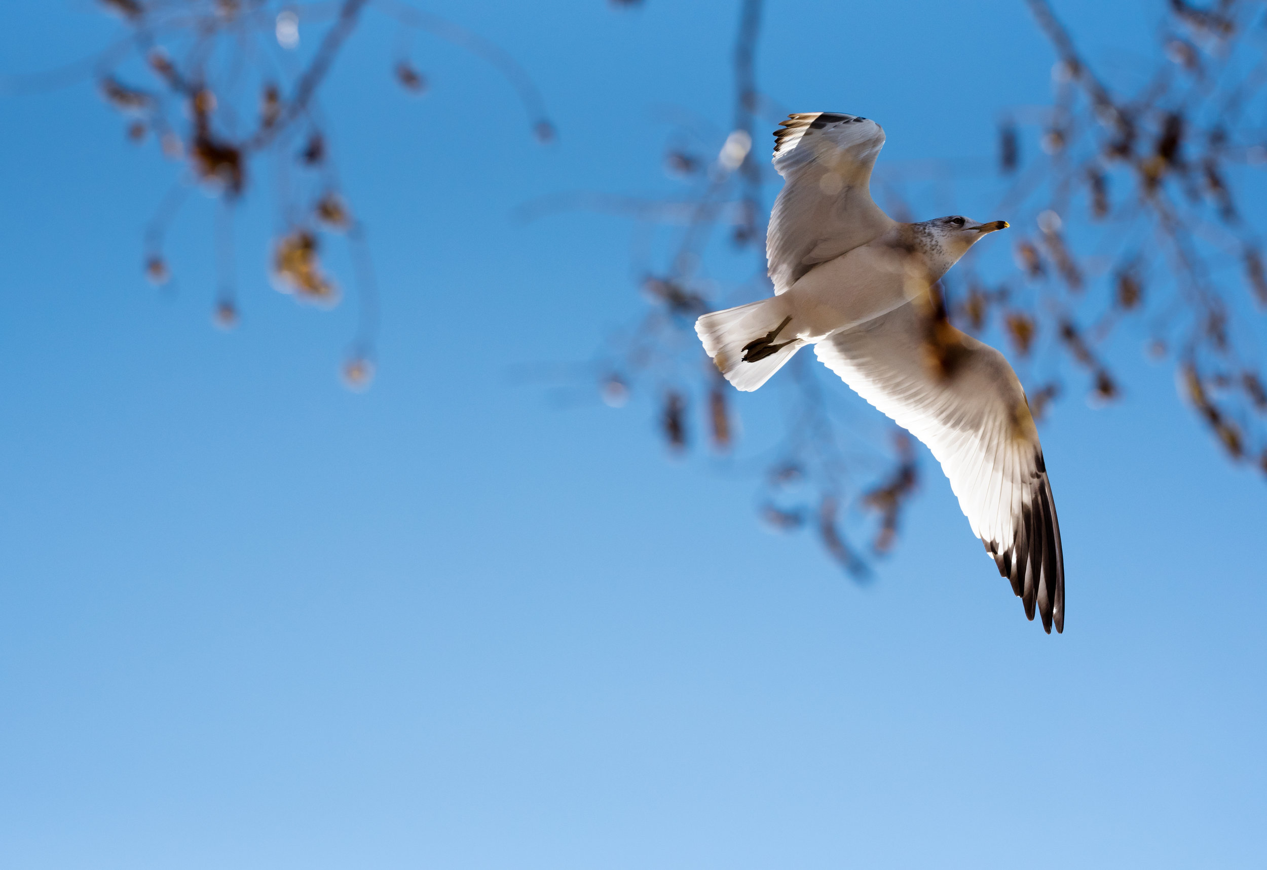 Segull Behind Leaves v3.jpg