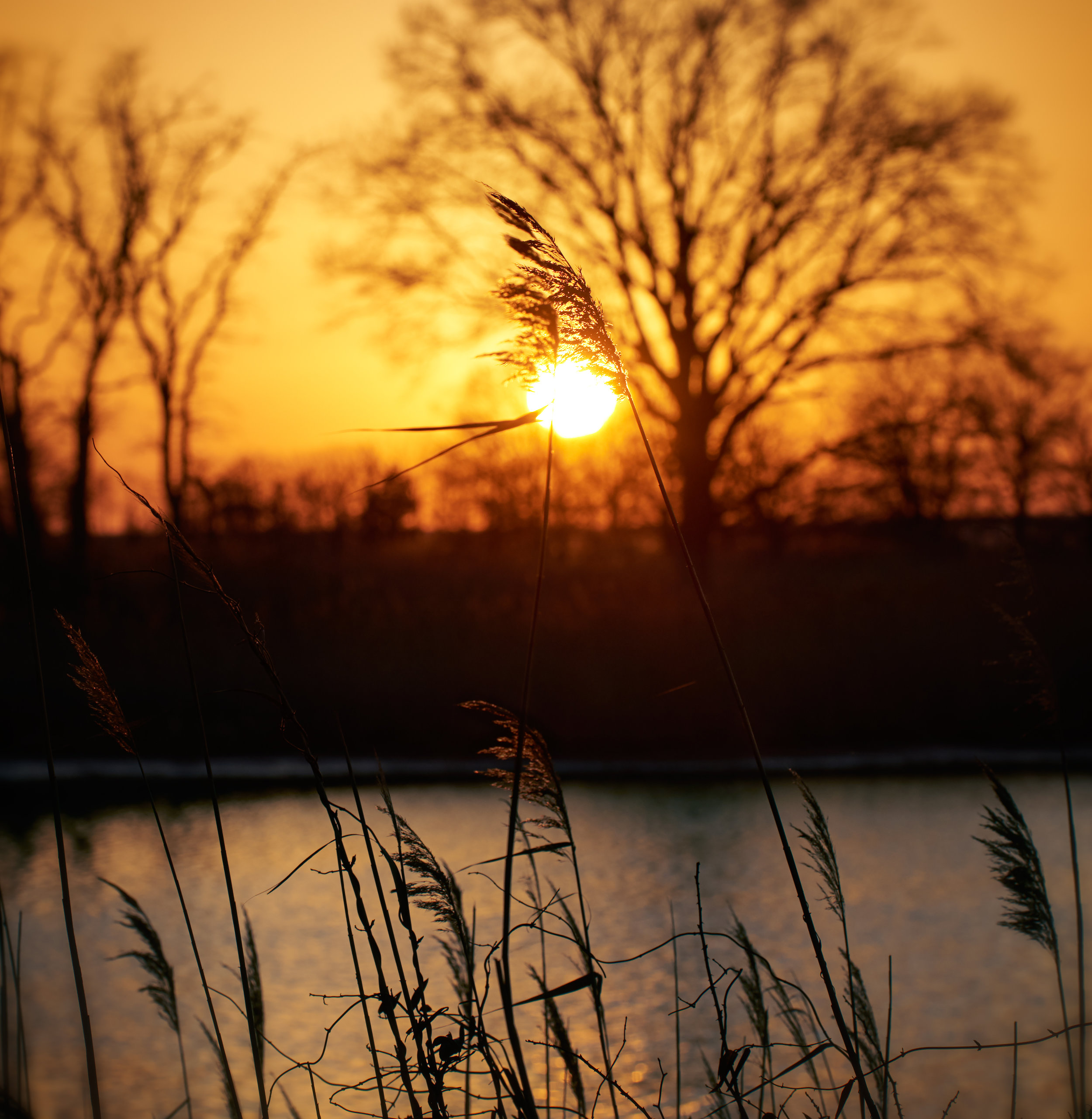 Reeds v5.jpg
