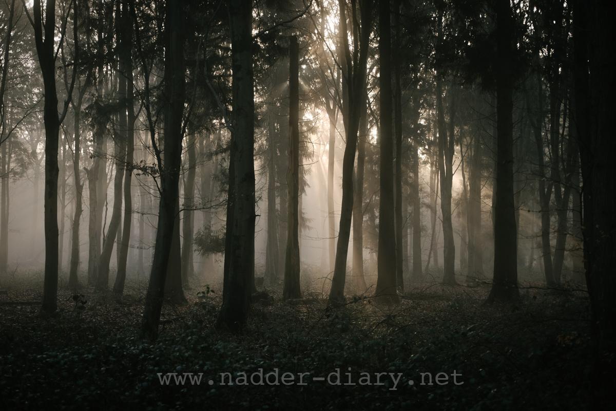 Nadder Diary