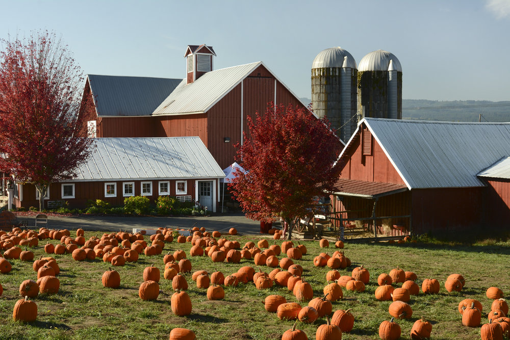 farm store ready for fall