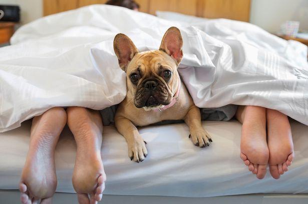 MAIN-dog-in-bed.jpg