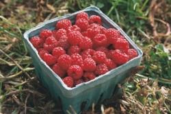 Raspberries 2.jpg