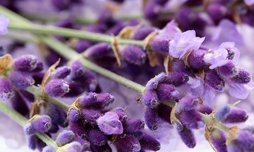 Lavender<br>Balsamic