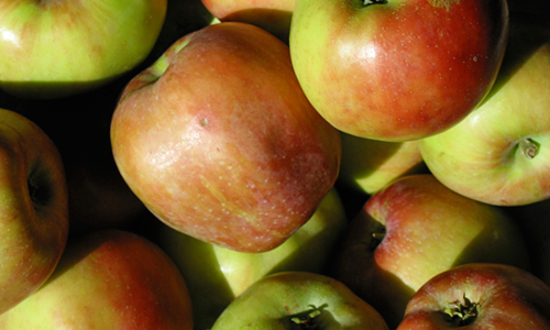 Graventein Apple<br>Balsamic