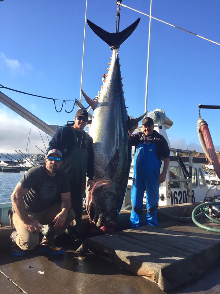 North Bay Fisherman's Coop tuna.jpg