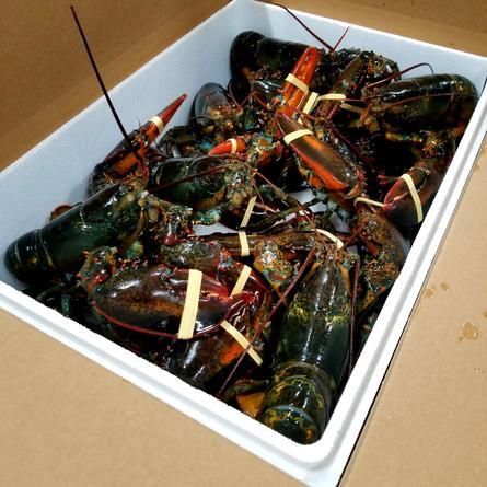 ac live lobsters.jpg