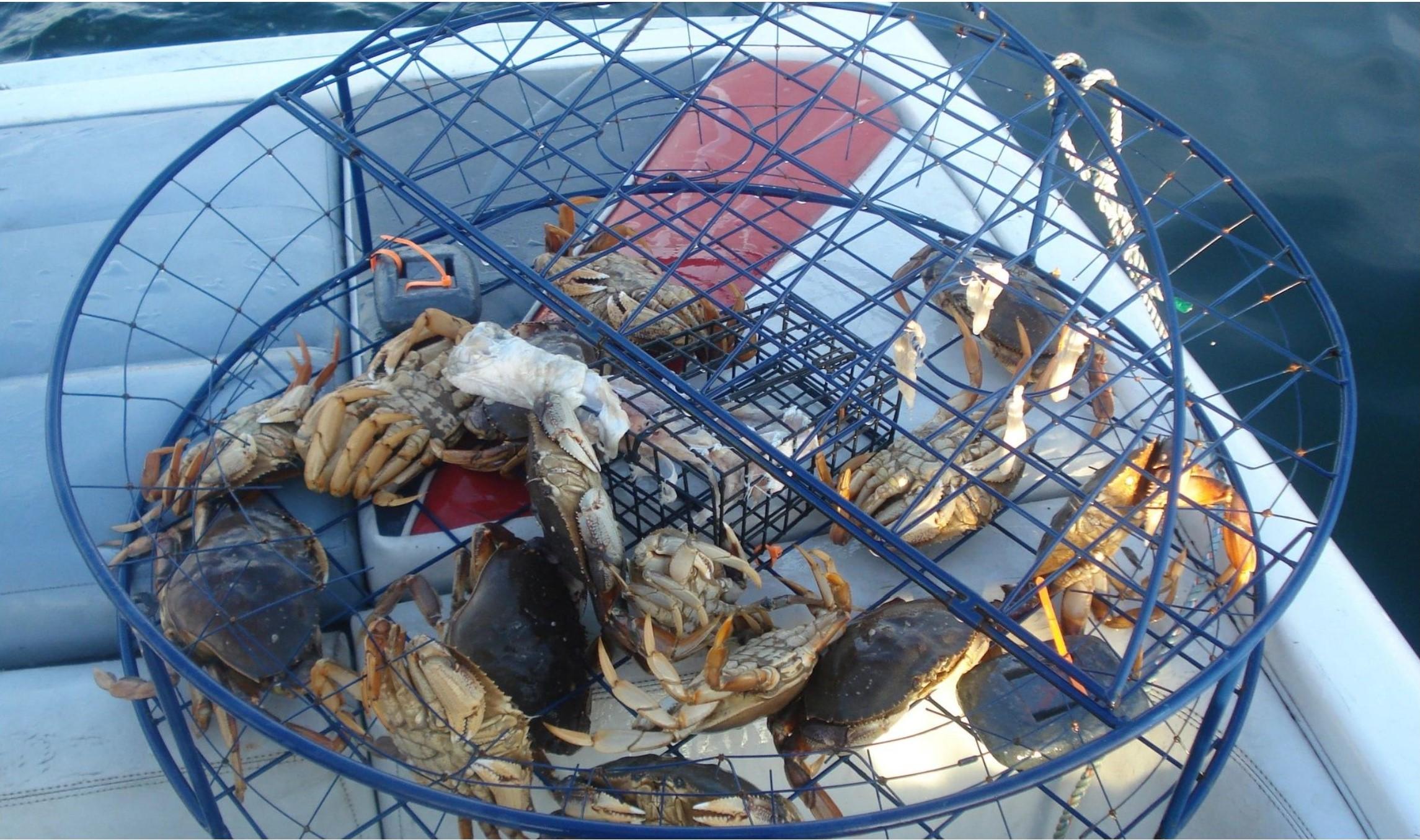 sea harvest 1.jpg