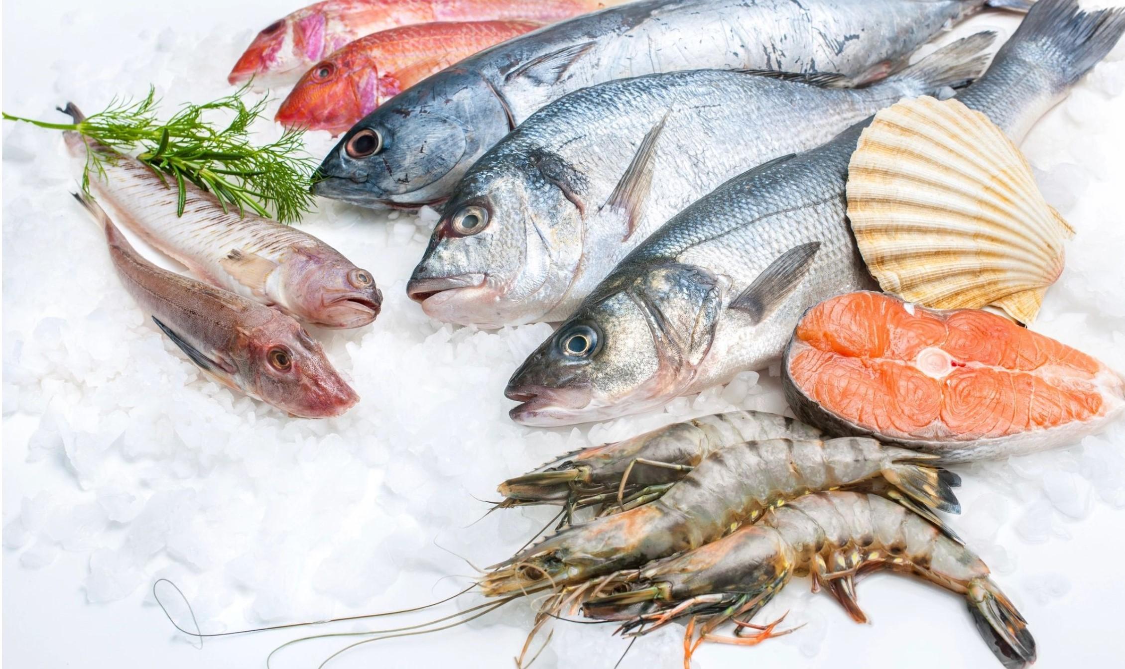 sea harvest 3.jpg