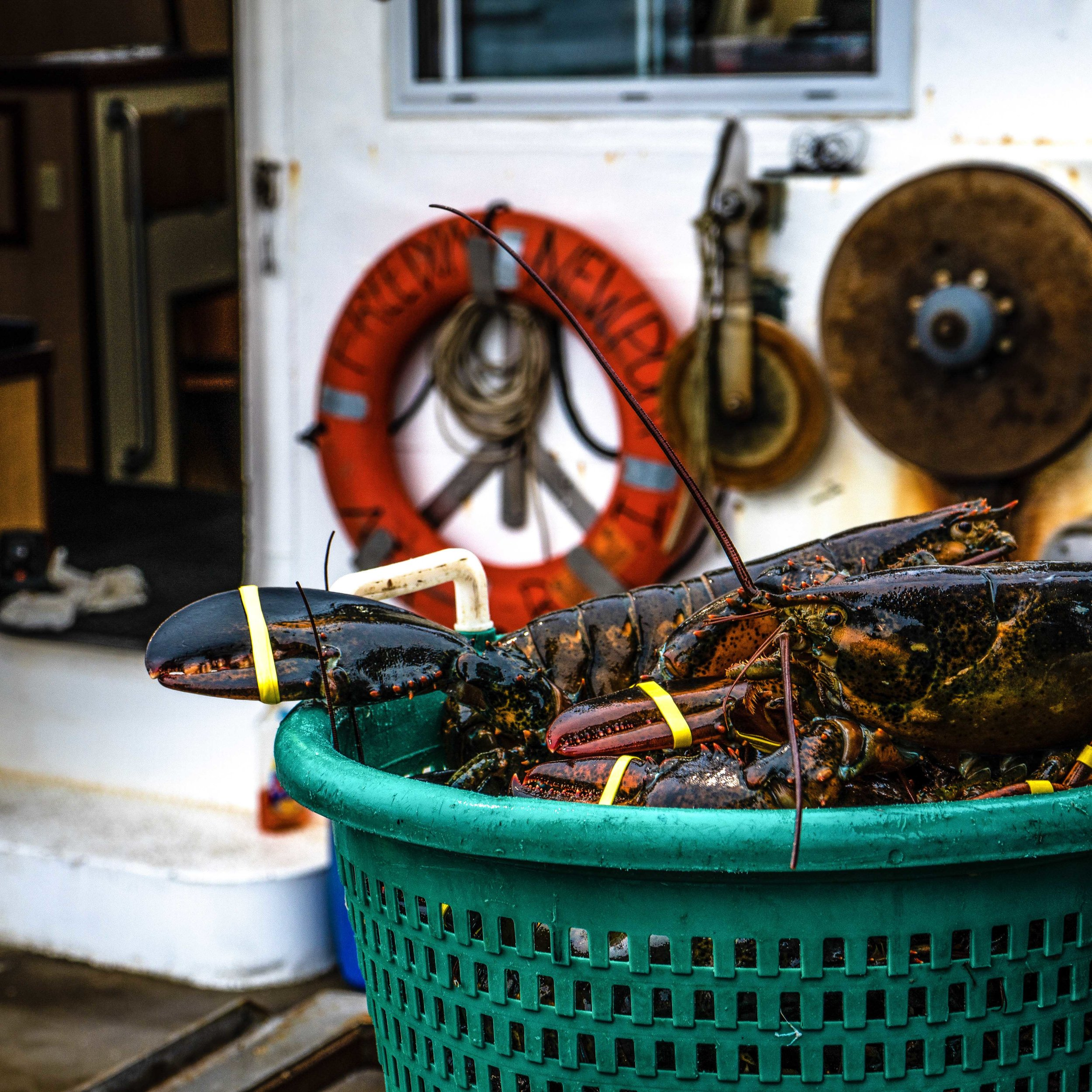 boston wholesale lobster lobser on boat.jpg