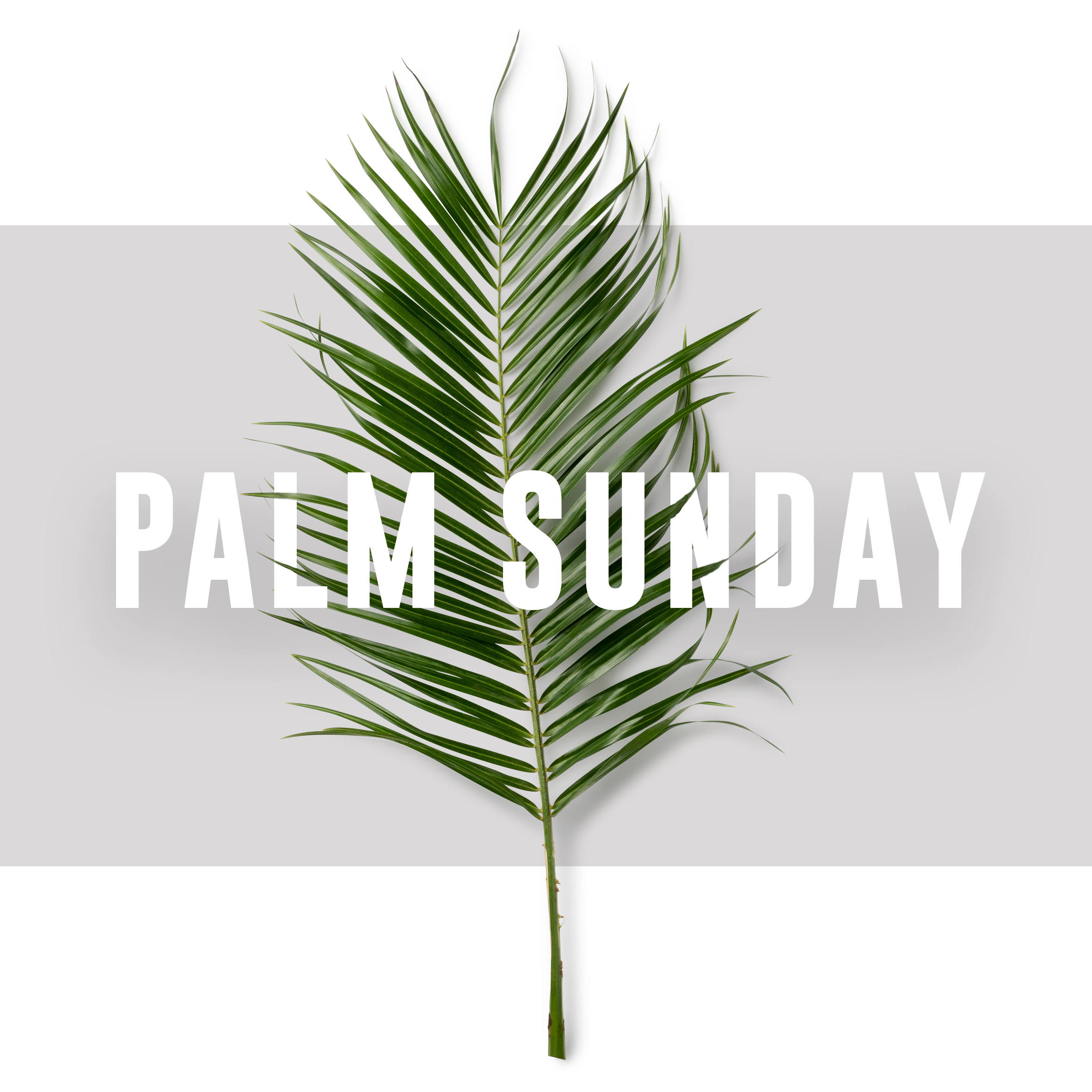 Palm Sunday - 14 APRIL 2019There will be NO morning gathering, instead we'll be cheering on Sheffield Half Marathon runners as they head past The Well. Use The Well as your base to cheer on friends and family and enjoy our cafe and facilities.Evening gathering at 7pm Gathering as normal.