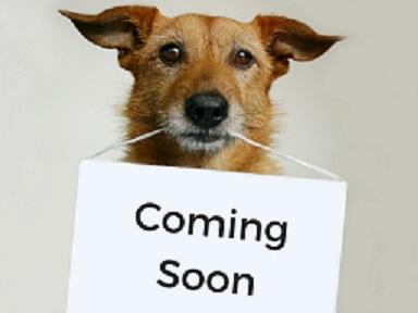 Dog Coming Soon small.jpg
