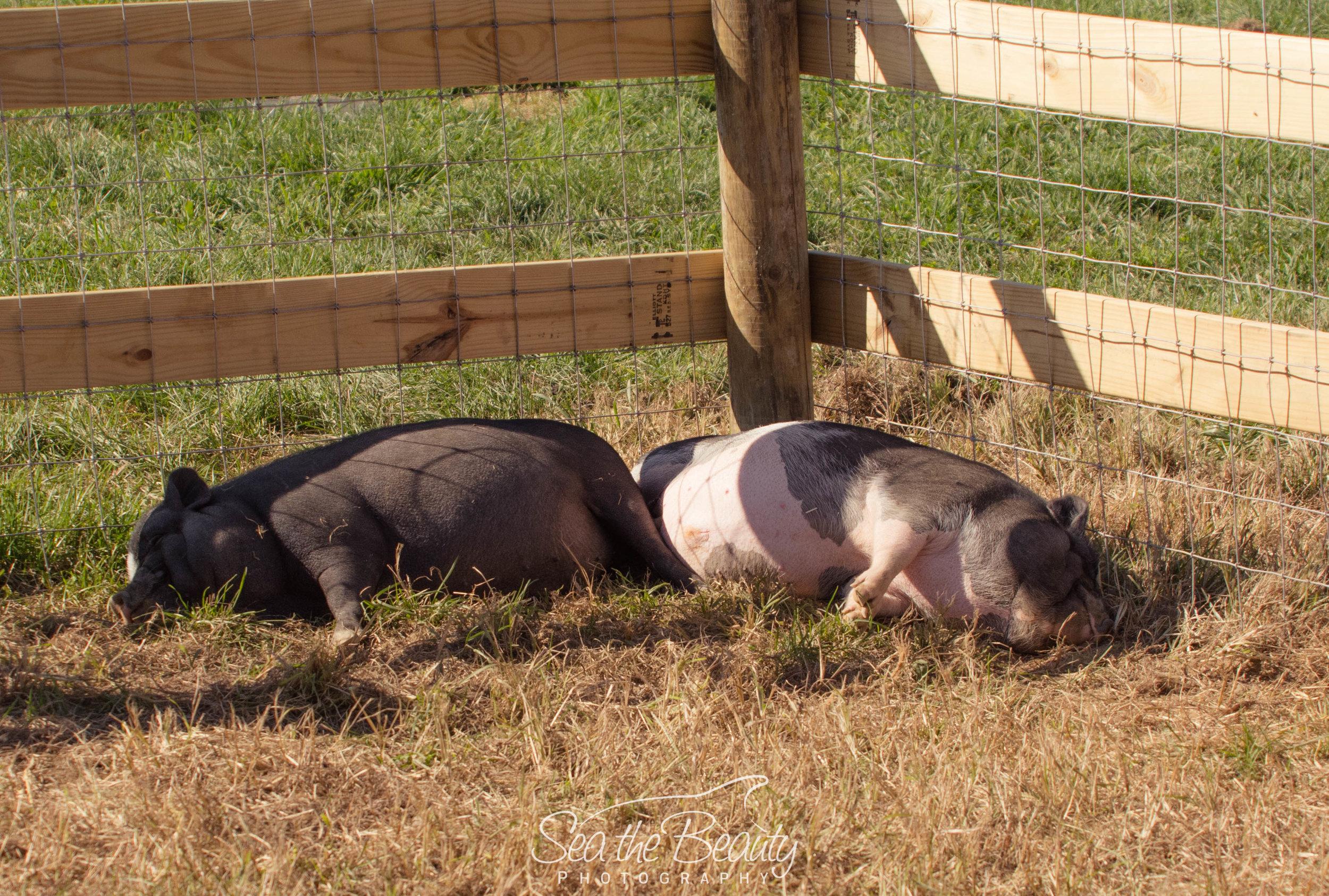 Elivs Pigsley and Piggy Smalls.jpg
