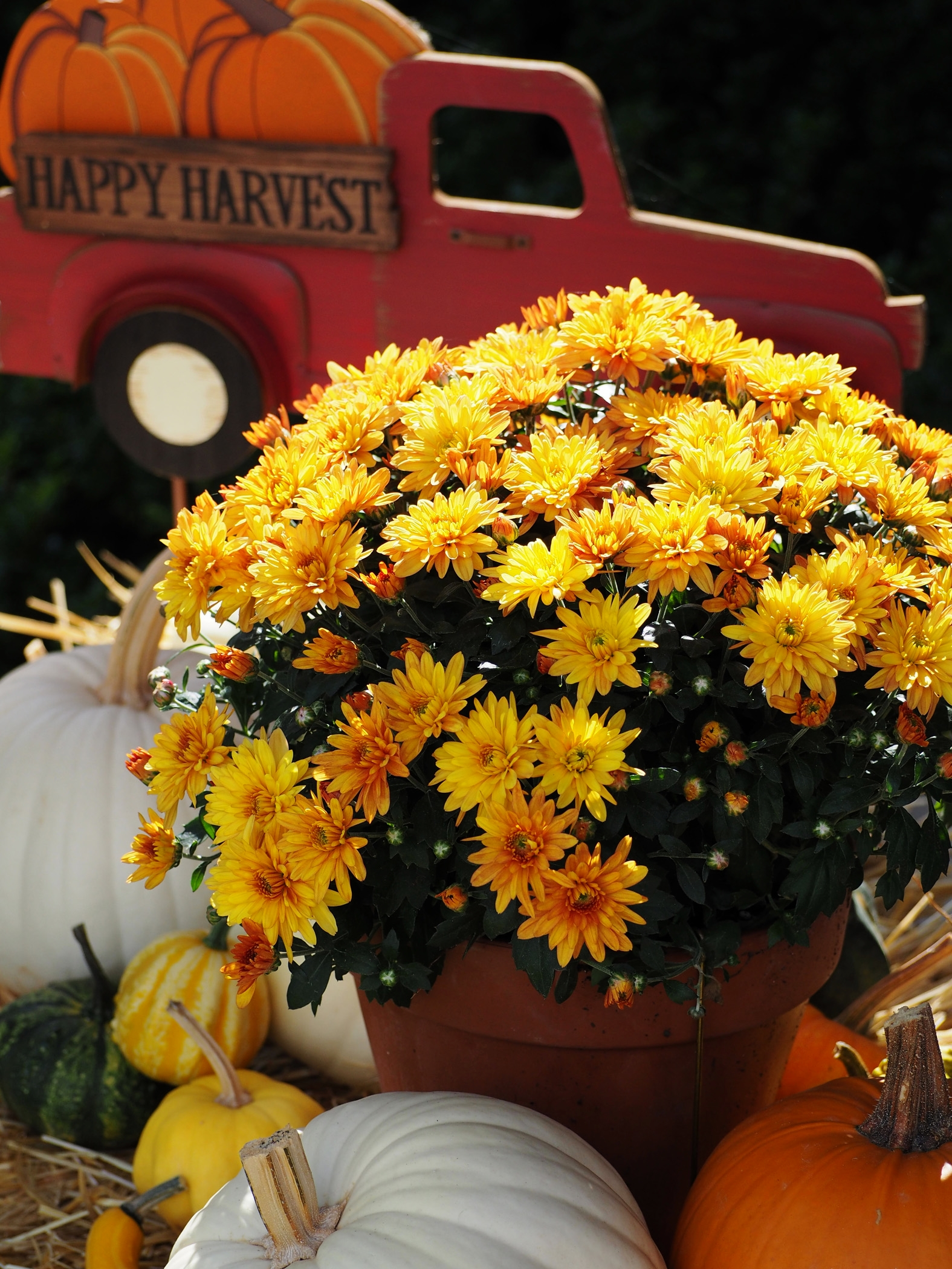 Happy Harvest! I had to have that adorable sign purchased at a local farm store here in our town.