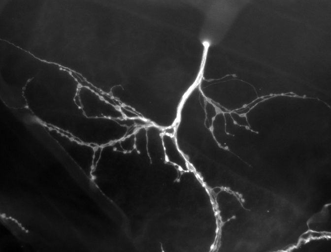 synapse1.jpg