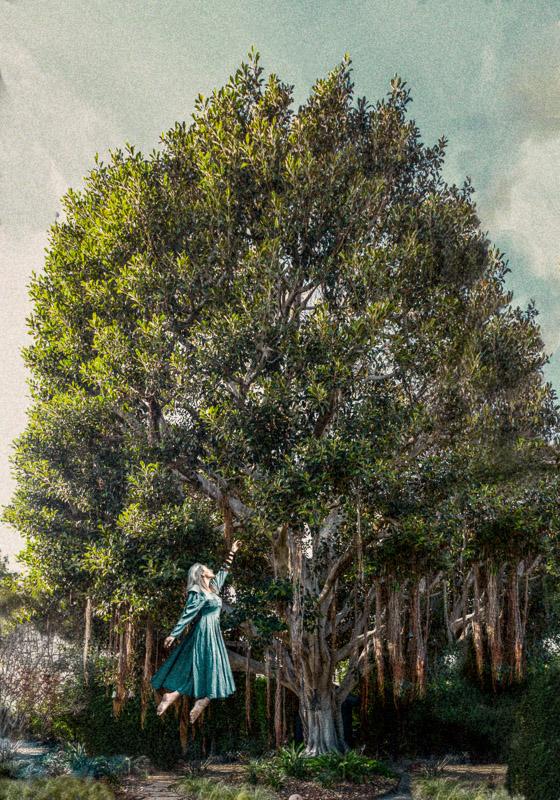 Lisa's Banyon tree