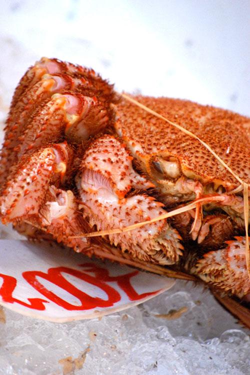 crab | japan