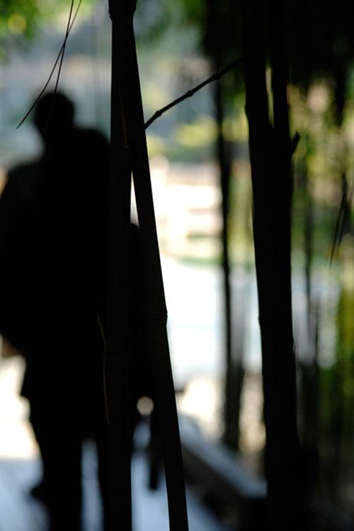 shadows | los angeles