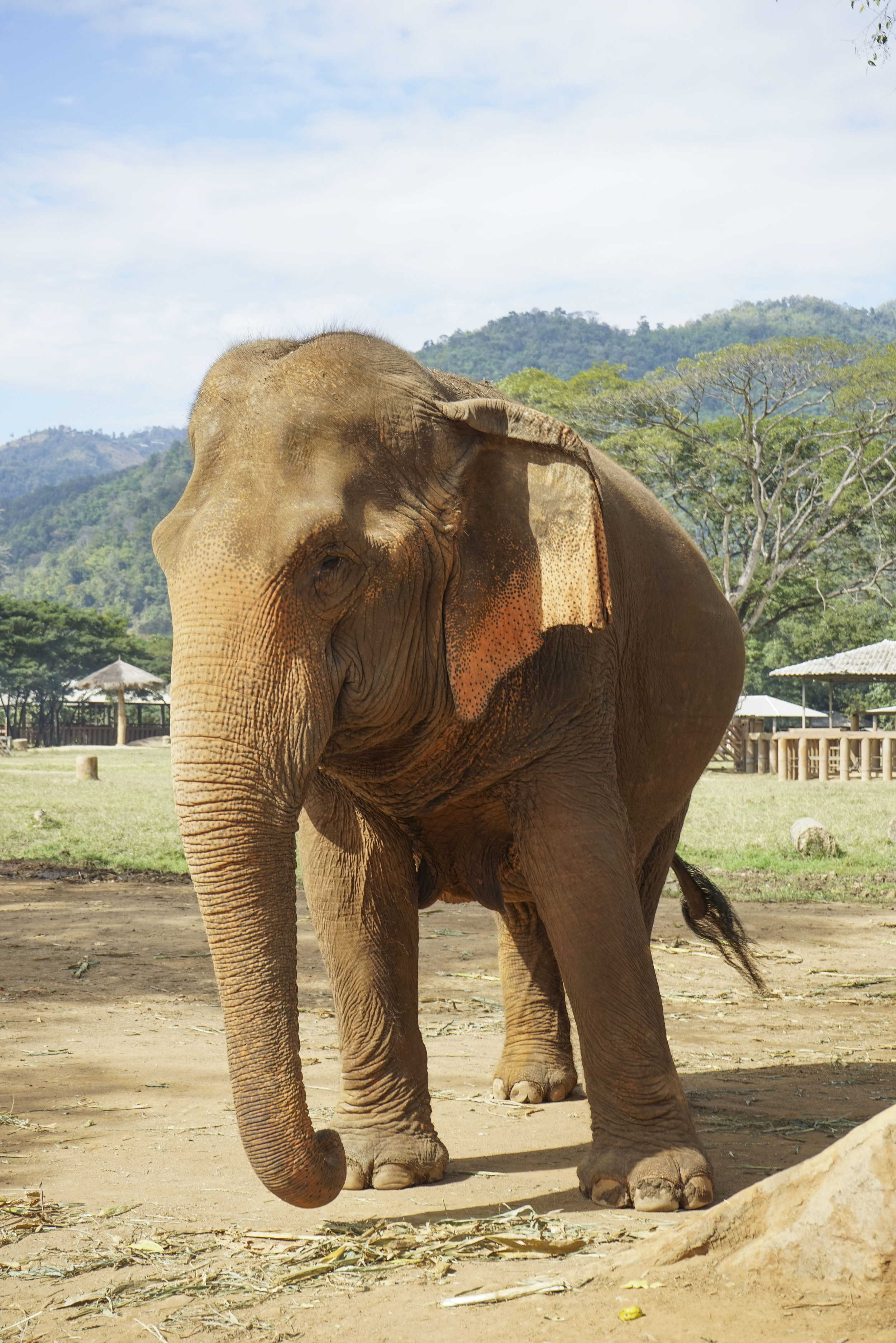 elephant | thailand